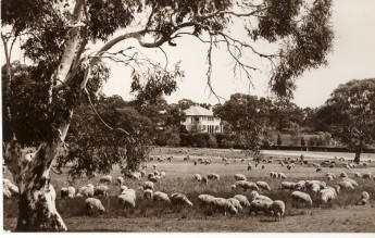 A place where sheep may safely graze. c. 1940,  photographer R C Strangman,  Museum of Australian Democracy collection
