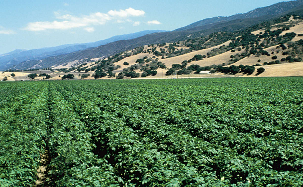 Salinas Agriculture