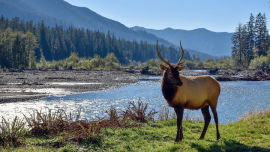 This elk looking as majestic as anything!.