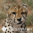 Study Abroad Reviews for Earthwatch: Namibia - Cheetah Conservation in Namibia