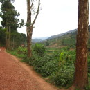 SIT Rwanda: Post-Genocide Restoration & Peacebuilding Photo