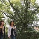 Study Abroad Reviews for Ritsumeikan University: Kyoto - The Ritsumeikan Summer & Winter Program