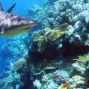 Study Abroad Reviews for Broadreach: Program at Sea - Fiji Shark Studies