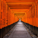 Study Abroad Reviews for The Education Abroad Network (TEAN): Kyoto Internship Program