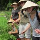 Study Abroad Reviews for SIT Study Abroad: Vietnam: Nongovernmental Organization Internship (Summer)