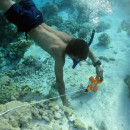 Study Abroad Reviews for SEA Semester: Pacific Reef Expedition (Summer)