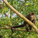 Study Abroad Reviews for Round River Conservation Studies - Belize Program