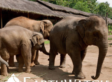 Study Abroad Reviews for Earthwatch: Thailand - Thinking Like an Elephant in Thailand