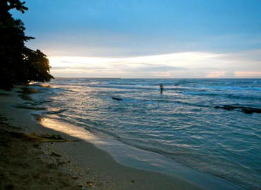 Study Abroad Reviews for SUNY Binghamton: Traveling - Tropical Forest Workshop