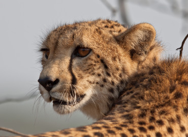 Study Abroad Reviews for African Impact: Large Predators Research & Conservation Project in South Africa