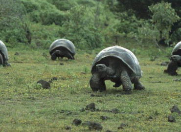 Study Abroad Reviews for University of Northern Iowa: Field Biology on the Galapagos