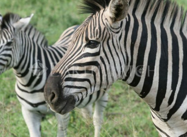 Study Abroad Reviews for Earthwatch: South Africa - Walking with African Wildlife