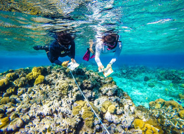 Study Abroad Reviews for The School for Field Studies / SFS: Turks and Caicos Islands - Marine Resource Studies