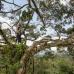 Photo of British Exploring Society - Peruvian Amazon