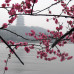 Photo of Middlebury Schools Abroad: Middlebury in Hangzhou