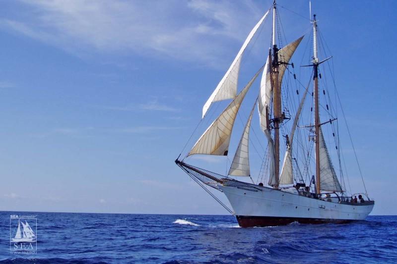 semester at sea presidential scholarship essay