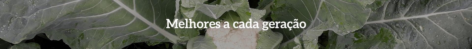 Couves-Flores Seminis