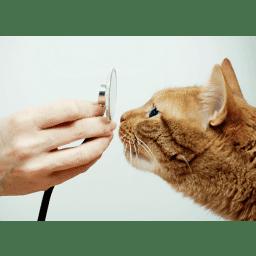 Deborah Y Strauss Dvm Veterinary Professional Self Employed Deborah Y Strauss D V M Mobile Service Crunchbase Person Profile