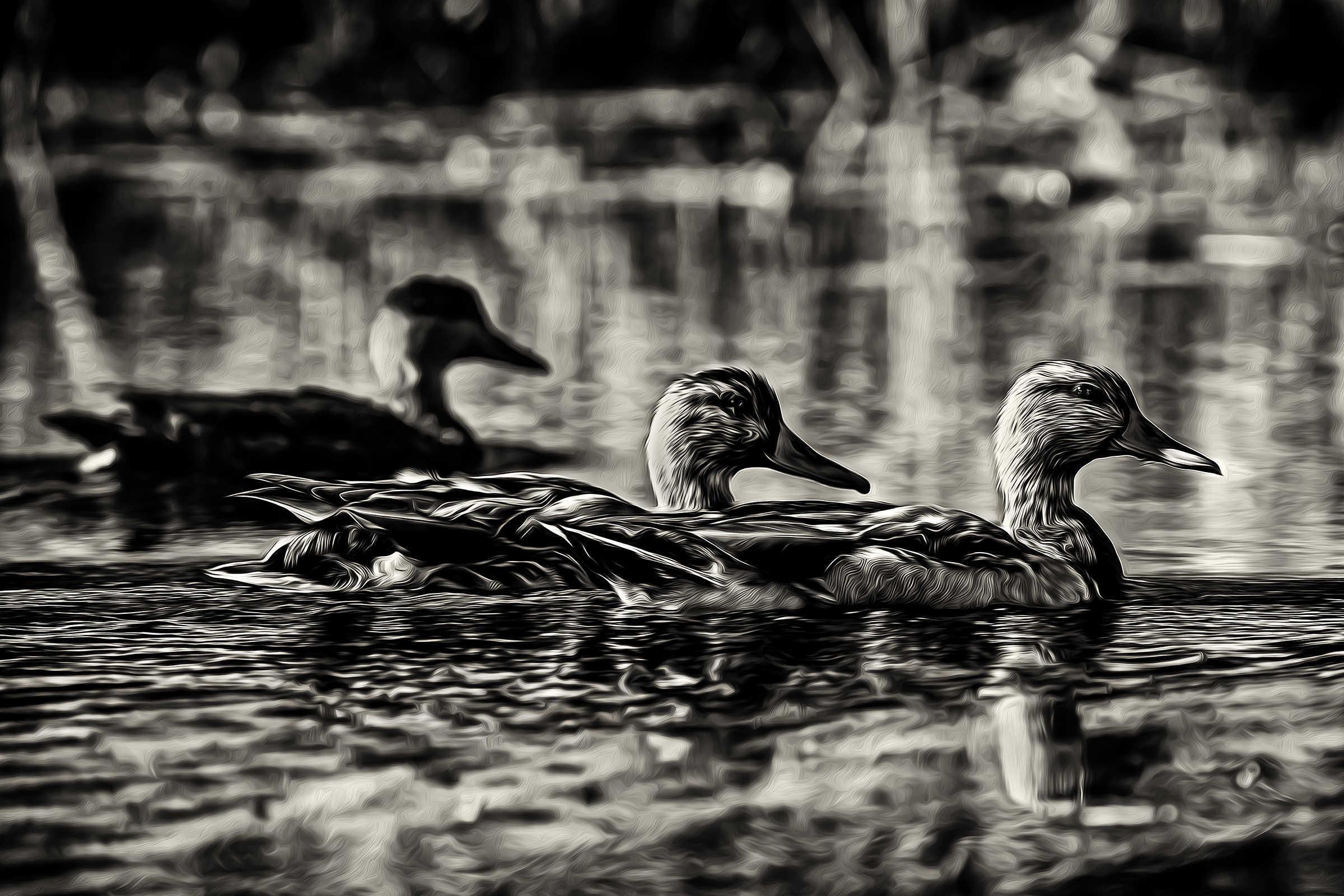 50_ducklings_dyumuh