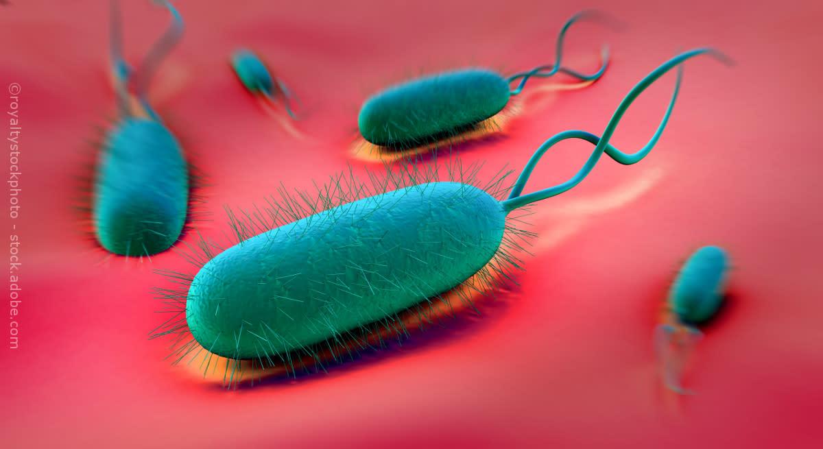 Helicobacter royaltystockphoto adobestockamrnay