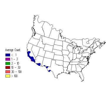 Cassin's Kingbird winter distribution map