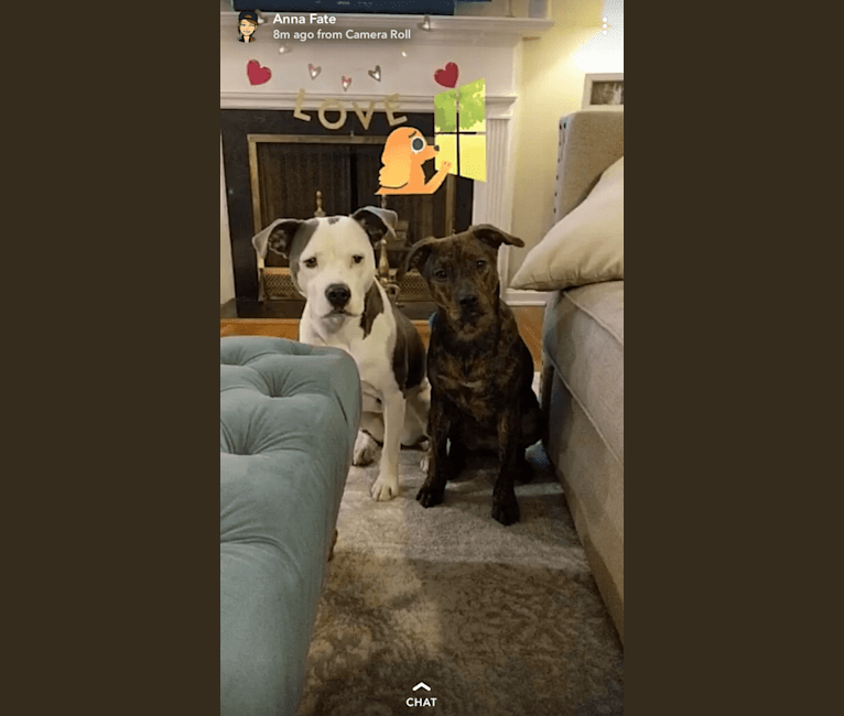 Photo of Lola, a Boxer, American Pit Bull Terrier, Russell-type Terrier, Chow Chow, and Chinese Shar-Pei mix in Cleveland, Ohio, USA