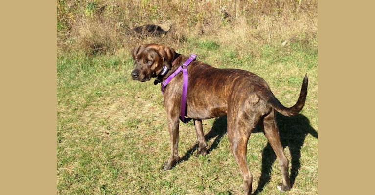 """92lbs and sleep all night under the covers by our feet. She is full of  energy and loves to run hunt."""" 02c9bd2fb257"""