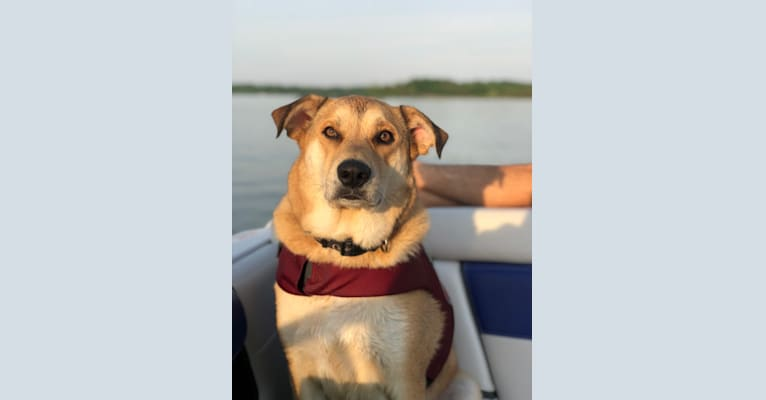 Photo of Brody, a Rat Terrier, Great Pyrenees, and Labrador Retriever mix in Nashville, Tennessee, USA