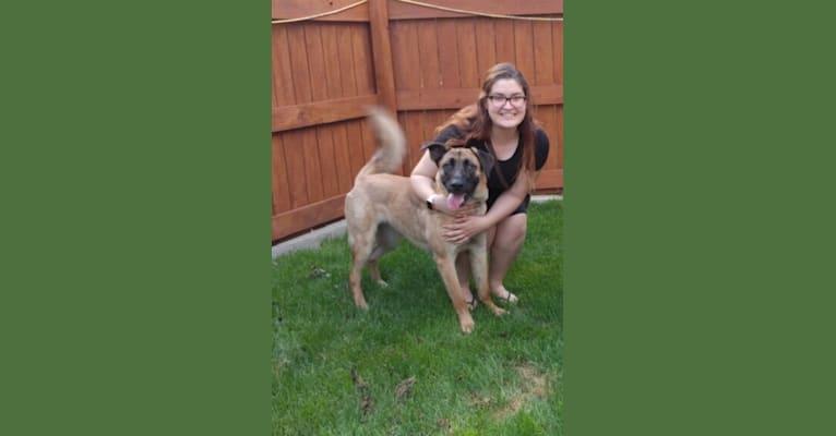 Photo of Dakota, a German Shepherd Dog and Boxer mix in Minneapolis, Minnesota, USA