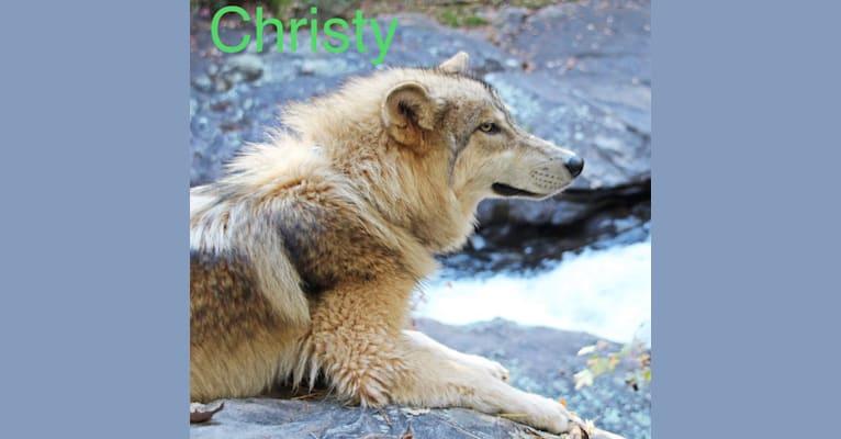 Photo of Christy, a
