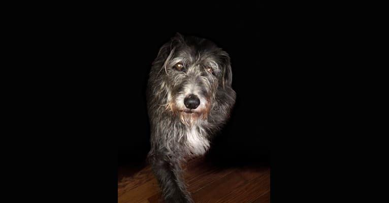 Photo of Nikki, a Southeast Asian Village Dog  in Pembroke, Massachusetts, USA