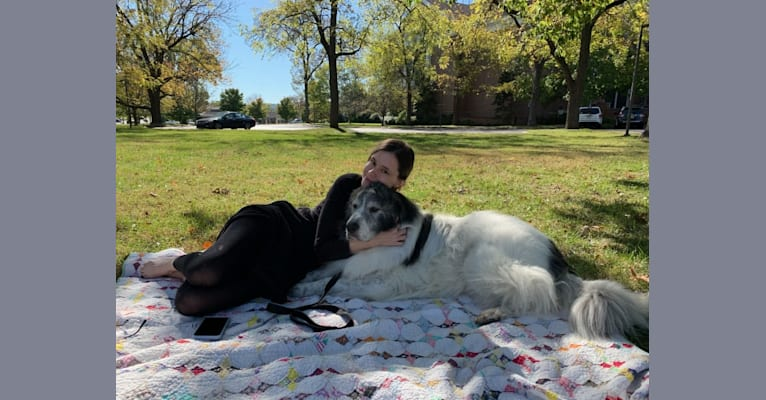 Photo of Mixie, a Great Pyrenees  in Jackson, Tennessee, USA