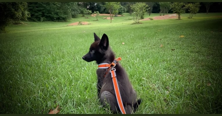 Photo of Alpha, a   in Downsville, Louisiana, USA
