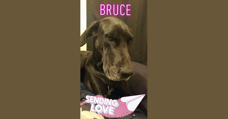 Photo of Bruce, a Great Dane  in Arizona, USA