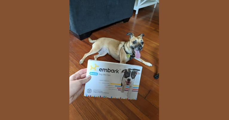 Photo of Audrey, a Chihuahua, Miniature Pinscher, Poodle (Small), Border Collie, Russell-type Terrier, and Mixed mix in Louisville, Kentucky, USA