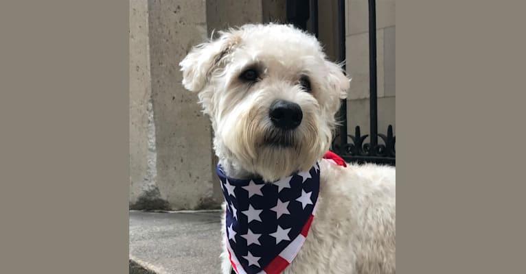 Photo of Benji Borden, a Soft Coated Wheaten Terrier  in Cumberland, RI, USA