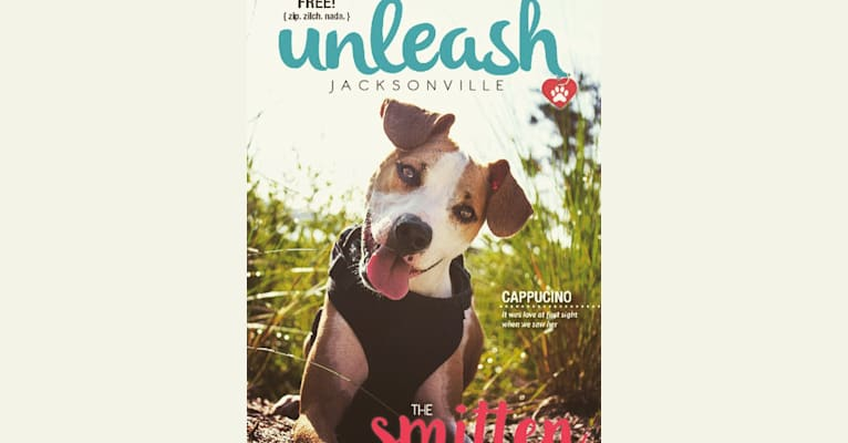Photo of Cappucino, a Chihuahua, American Pit Bull Terrier, American Bully, and Miniature Pinscher mix in Jacksonville, Florida, USA