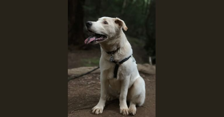 Photo of Ludo, a German Shepherd Dog, Border Collie, Siberian Husky, and Mixed mix in Santa Rosa, CA, USA