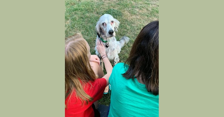 Photo of Casper, a Llewellin Setter  in Portland, Oregon, USA