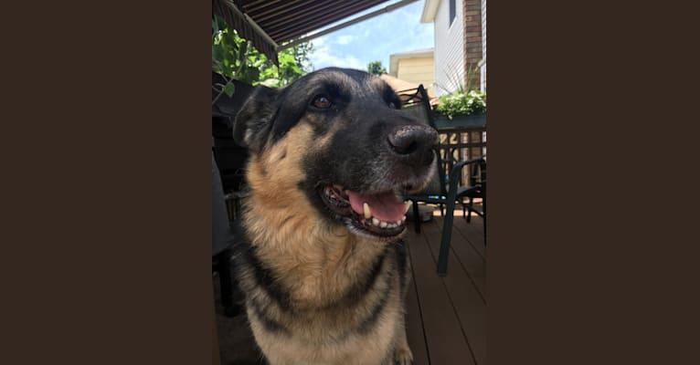 Photo of Luna, a German Shepherd Dog, Labrador Retriever, and Chow Chow mix in Kentucky, USA
