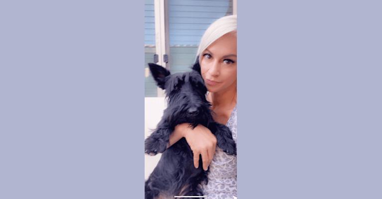 Photo of Zena, a Scottish Terrier  in Ohio, USA
