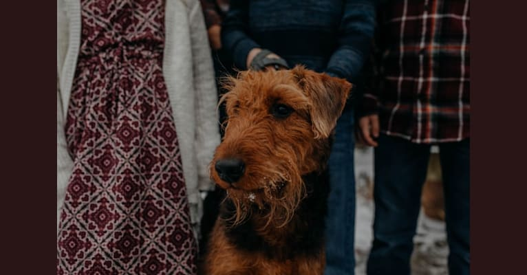 Photo of Joy, an Airedale Terrier  in Pennsylvania, USA