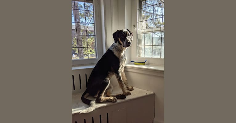Photo of Crick, a Border Collie and Bluetick Coonhound mix in Ange-Gardien, Quebec, Canada