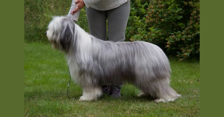 Photo of Kitty, a Bearded Collie  in Tystberga, Sverige