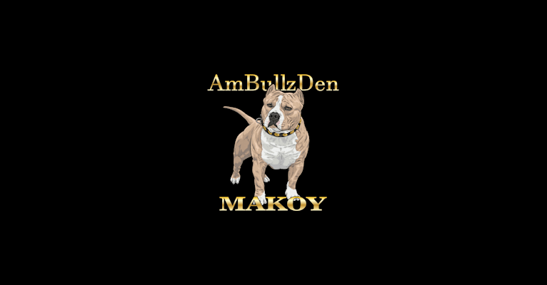 Photo of 👌🏼MAKOY, an American Bully  in Washington, USA