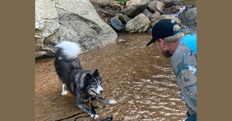Photo of Odin, a   in Cripple Creek, CO, USA