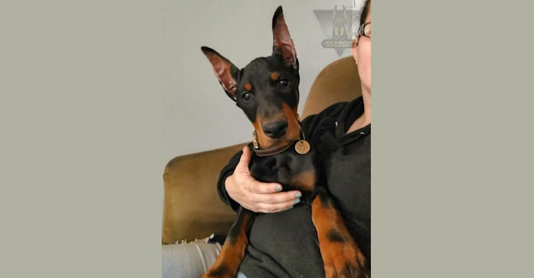 Photo of Mage, a Doberman Pinscher  in Humble, TX, USA