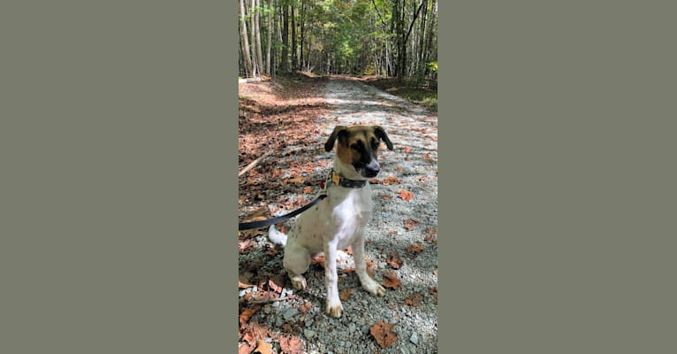 Photo of Zoe, a Labrador Retriever, American Foxhound, Chow Chow, German Shepherd Dog, Treeing Walker Coonhound, and Mixed mix in Durham, North Carolina, USA