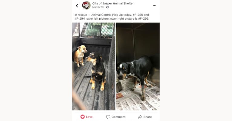 Photo of Tica, a Dachshund, Rat Terrier, Labrador Retriever, Miniature Schnauzer, Cocker Spaniel, and Mixed mix in Jasper, Alabama, USA