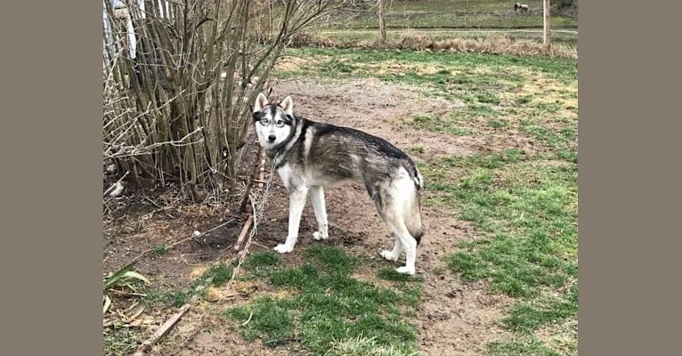 Photo of Athena, a   in Ohio, USA